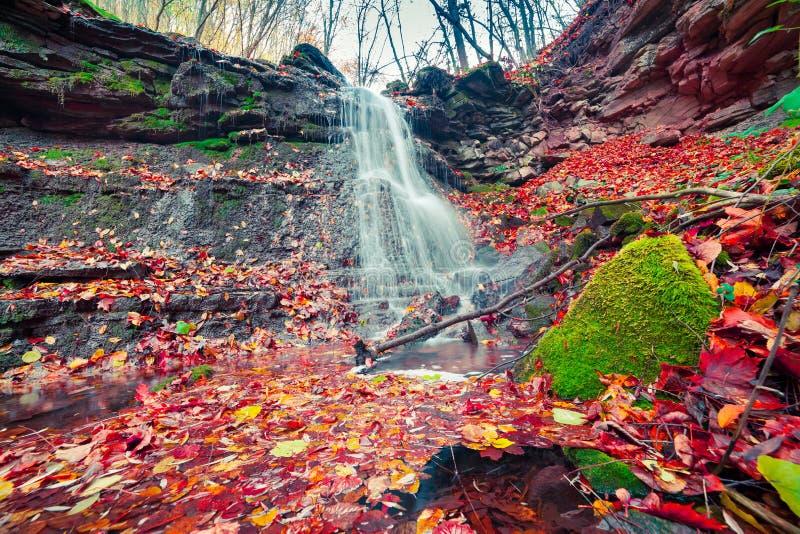 Härlig sikt av den rena vattenvattenfallet i höstskogsmark royaltyfri fotografi