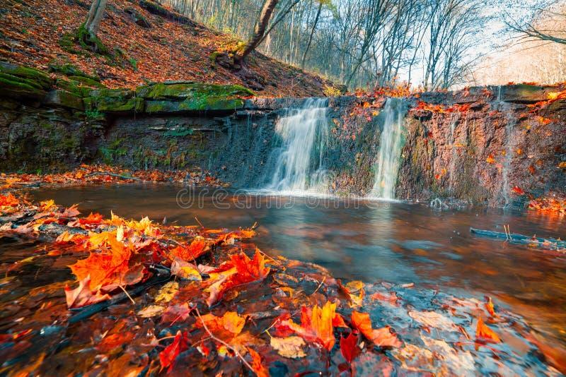 Härlig sikt av den rena vattenvattenfallet i höstskogsmark royaltyfria bilder