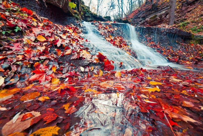 Härlig sikt av den rena vattenvattenfallet i höstskogsmark fotografering för bildbyråer