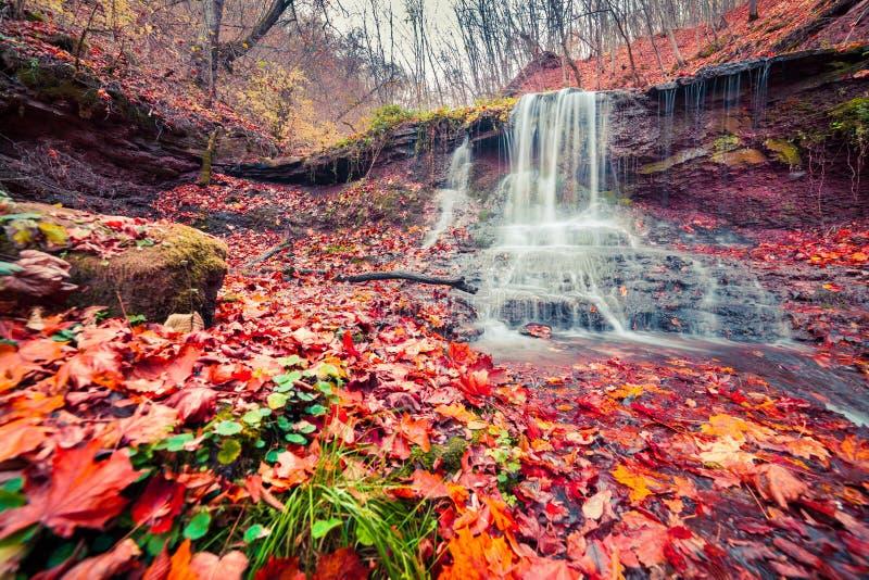Härlig sikt av den rena vattenvattenfallet i höstskogsmark royaltyfria foton