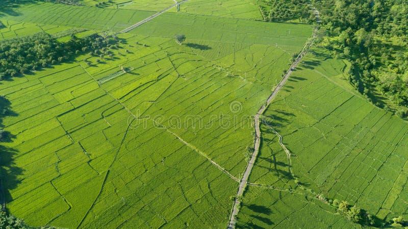 Härlig sikt av det gröna risfältfältet royaltyfria bilder