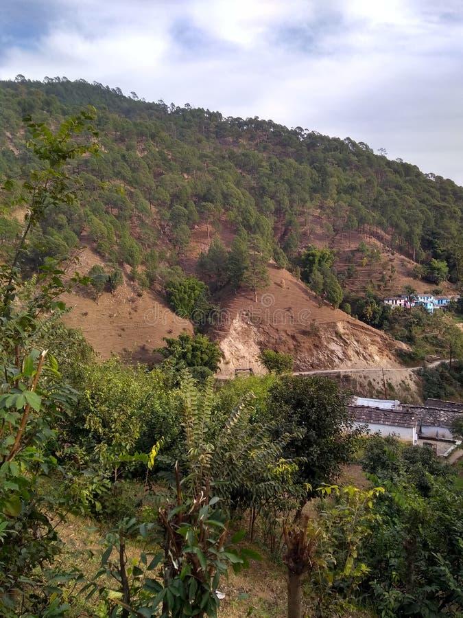 Härlig sikt av det Himalaya berget med gröna skogträd i uttarkashi i UK i Indien arkivfoto