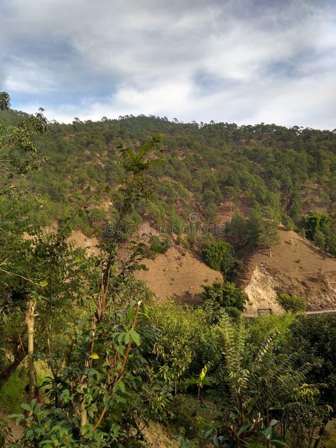 Härlig sikt av det Himalaya berget med gröna skogträd i uttarkashi i UK i Indien arkivbild