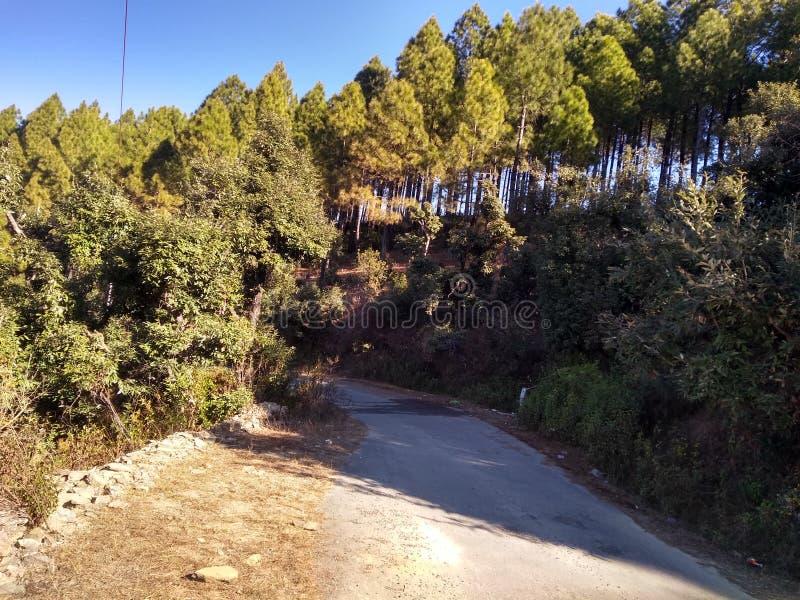 Härlig sikt av det Himalaya berget med gröna skogträd i uttarkashi i UK i Indien royaltyfria foton