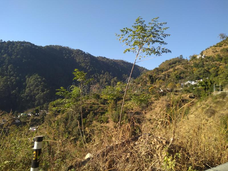Härlig sikt av det Himalaya berget med gröna skogträd i uttarkashi i UK i Indien royaltyfria bilder