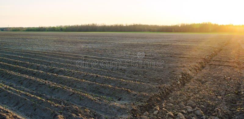H?rlig sikt av det plogade f?ltet p? en solig dag F?rberedelse f?r att plantera gr?nsaker Jordbruk jordbruksmark Mjukt selektivt royaltyfria foton