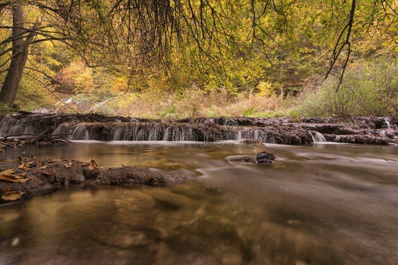 Härlig sikt av en flod med en vattenfall i skogen, Strandzha berg, Bulgarien royaltyfria bilder