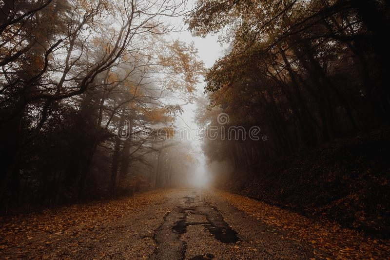Härlig sikt av en väg i mitt av dimma, med träd på sidorna och sidorna på jordningen arkivfoton