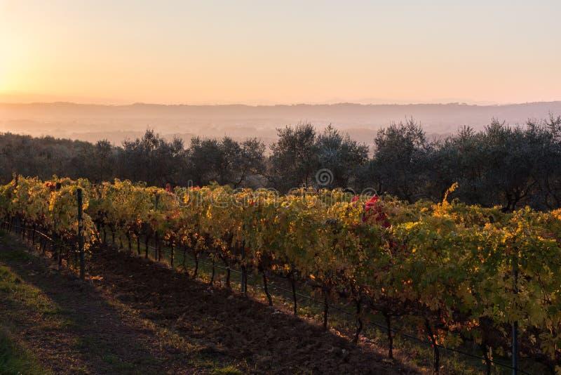 Härlig sikt av en vingård på solnedgången i höst, med rött, gree royaltyfri fotografi