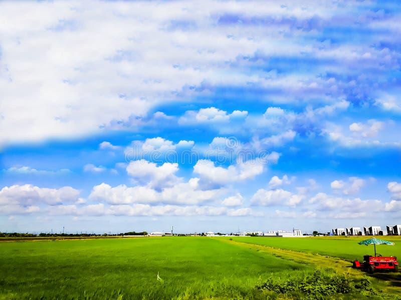 Härlig sikt av risfältet med morgonsoluppgång royaltyfri fotografi