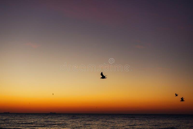Härlig sikt av seagulls som flyger i himmel på soluppgång i havet Fåglar i färgrik himmel under sollöneförhöjningen, atmosfäriskt arkivfoto