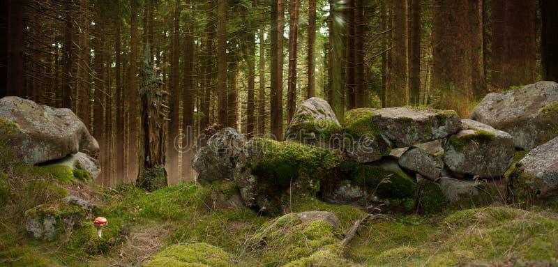 Härlig sikt av skogen royaltyfri bild