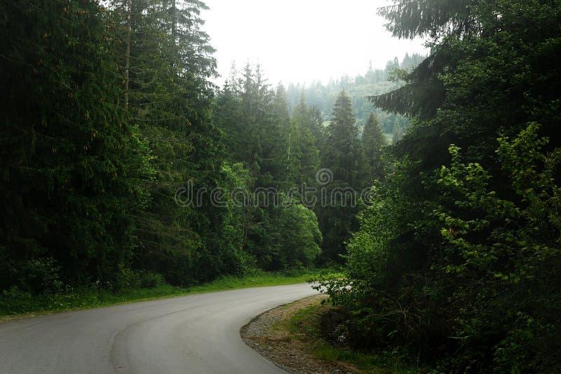 Härlig sikt av vägen bland träd i skogljus, lynnig atmosp royaltyfri bild
