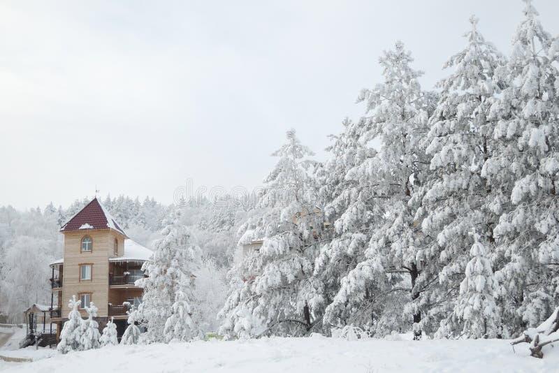 Härlig sikt av vinterskogen, de enorma granträden som täckas med snö, och en liten trästruktur arkivfoto