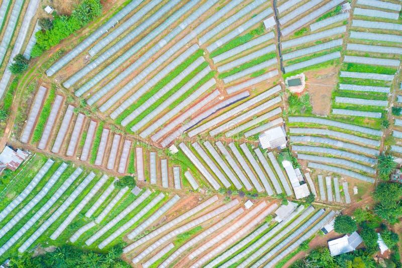 härlig sikt för flygfotografering av grönsaktäppor med frikänden royaltyfria bilder
