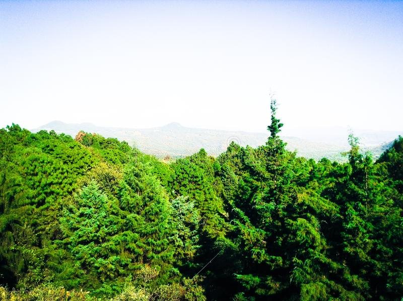 Härlig sikt inom en mystisk skog royaltyfria foton