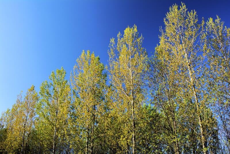 Härlig sikt med träd på en solig dag med en blå himmel royaltyfria bilder