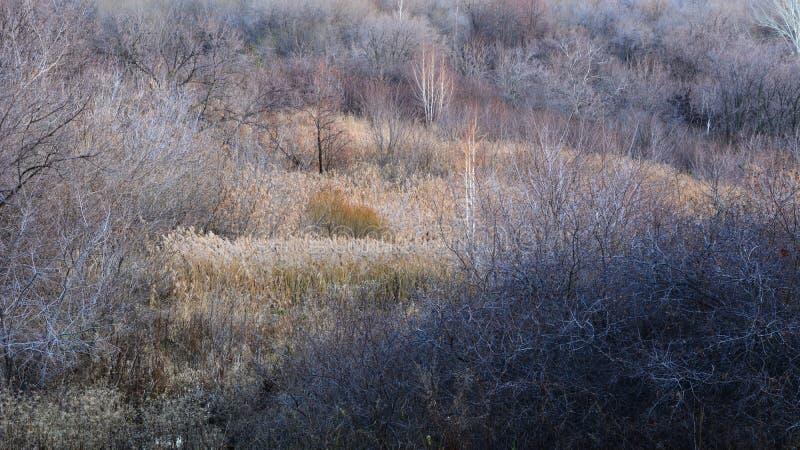 Härlig sikt med träd utan lövverk och torra sädesslag Höst för färger på senare Lugna landskap av den pittoreska naturen arkivfoto