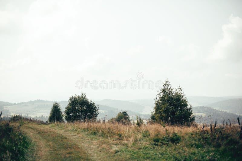 Härlig sikt på gröna bergkullar med skogen i dimmig dimma Träd och trän i Carpathian berg Unders?kande Europa royaltyfri bild