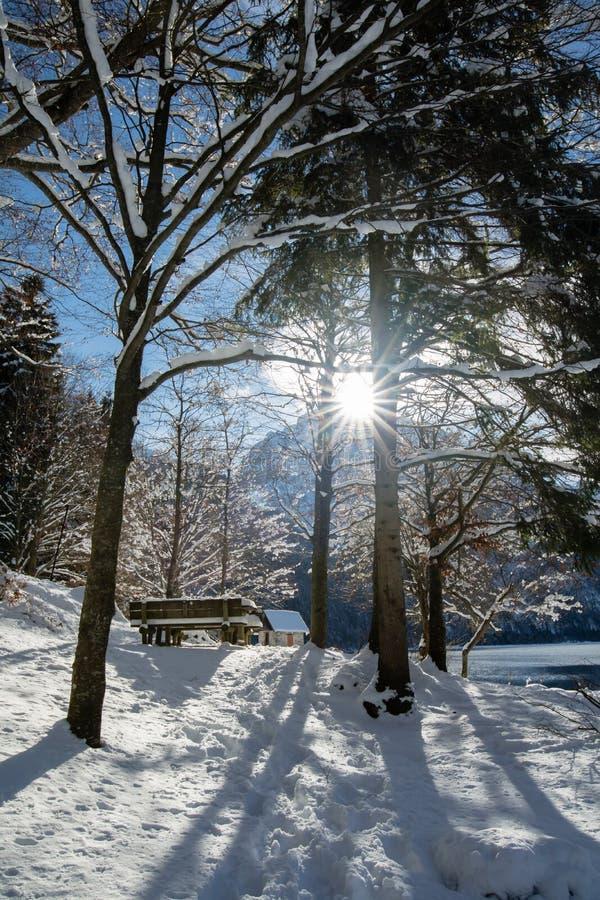 Härlig sikt till och med djupfrysta snöig träd på sjö lago del predil i sceniskt snöig vinterlandskap med solljusbaksidaljus i bl royaltyfri bild