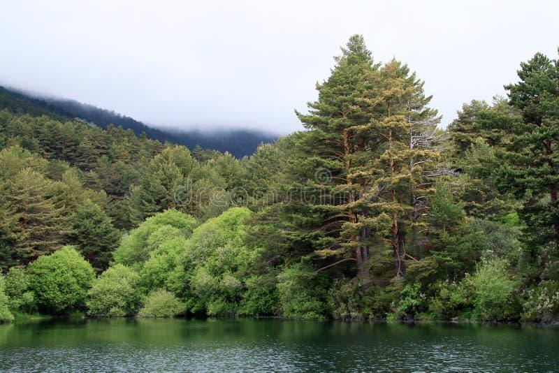 Härlig sjö och pinjeskog i en mörk dag royaltyfri bild