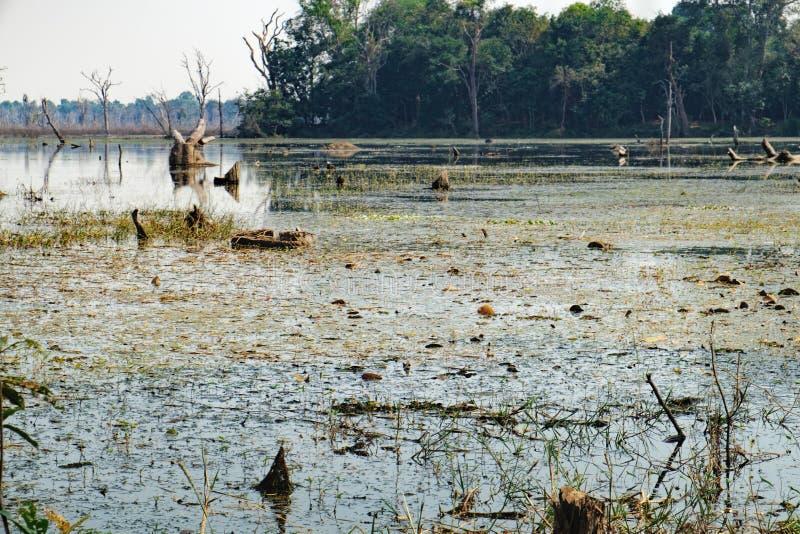 Härlig sjö runt om den Neak Pean templet, Cambodja arkivbilder