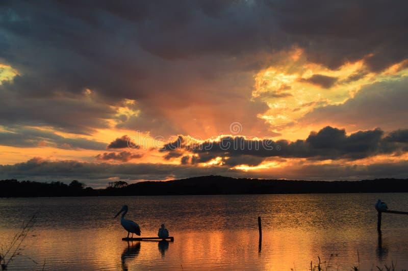 Härlig sjöMacquarie solnedgång royaltyfria foton