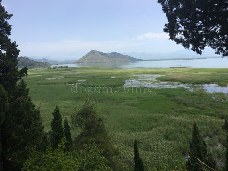 Härlig Skadar sjö i Montenegro fotografering för bildbyråer