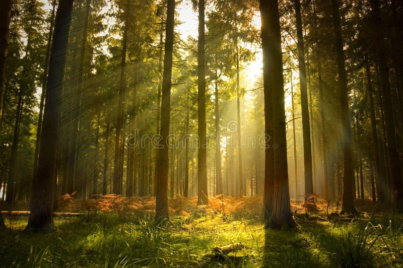 härlig skog royaltyfria bilder