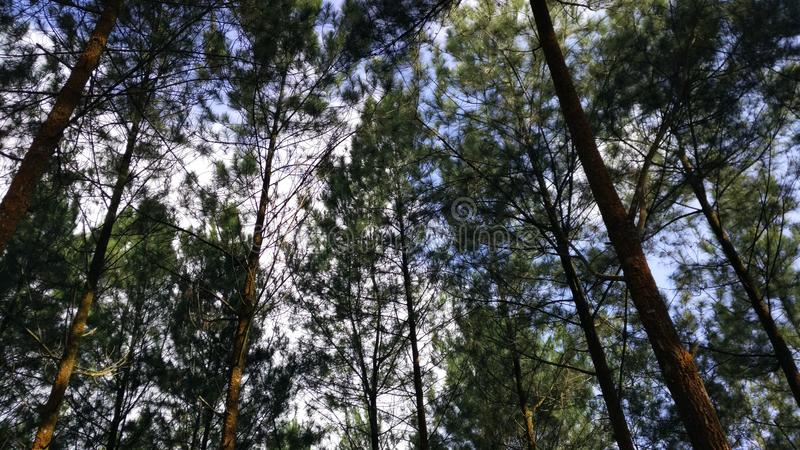 härlig skog royaltyfria foton
