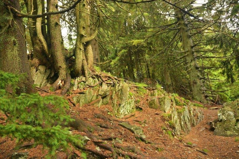 Härlig skog i bergen arkivfoto