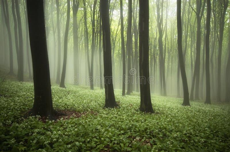 Härlig skog i vår med dimma, gröna växter och blommor royaltyfria bilder