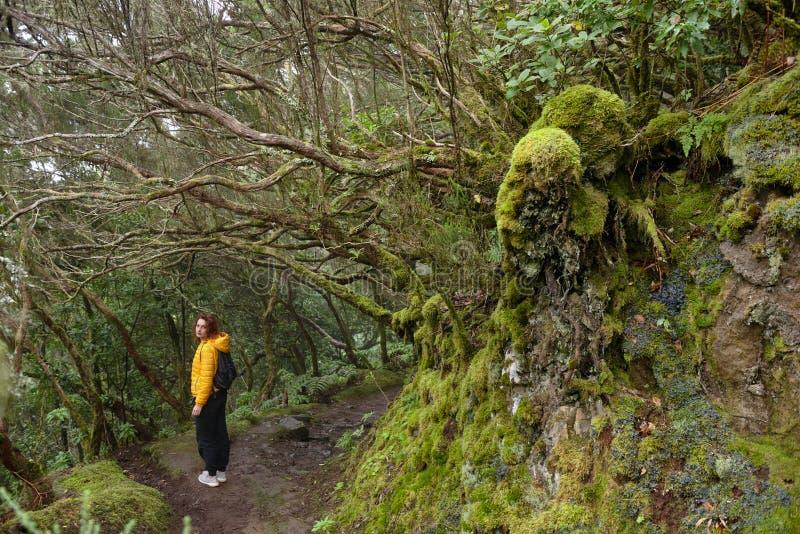 Härlig skog på en regnig dag fotvandra trail Lantliga Anaga parkerar - den forntida skogen på Tenerife, kanariefågelöar royaltyfri foto