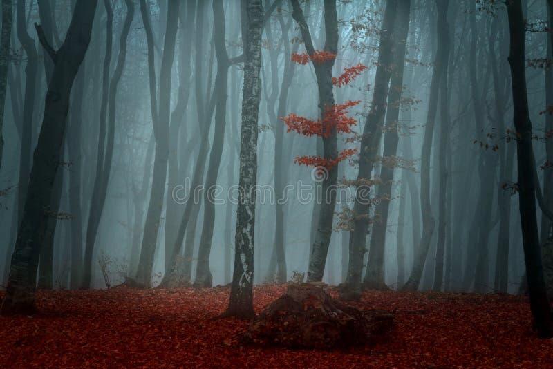 Härlig skog under höst royaltyfria foton