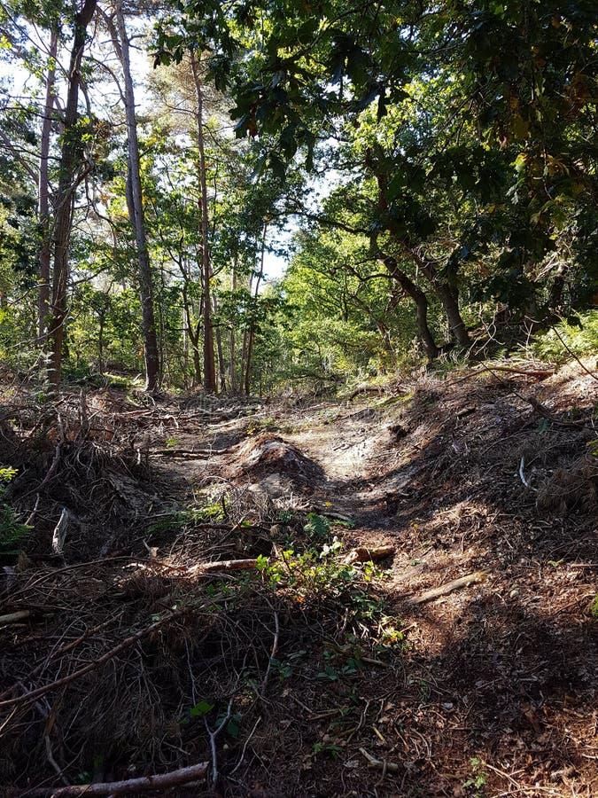 Härlig skogbild royaltyfri foto