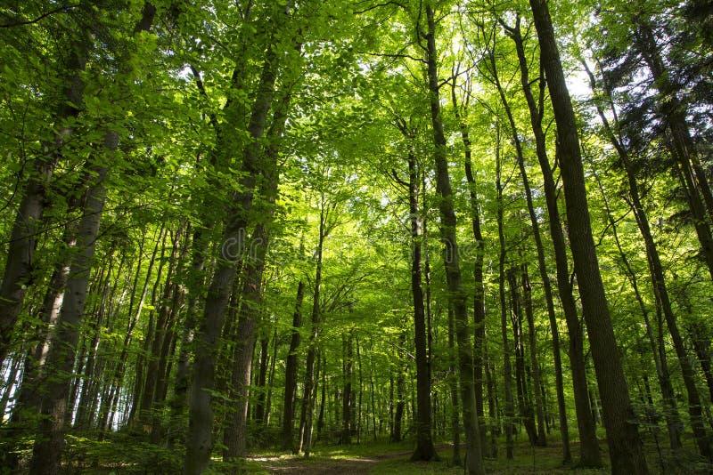 härlig skoggreen royaltyfri foto