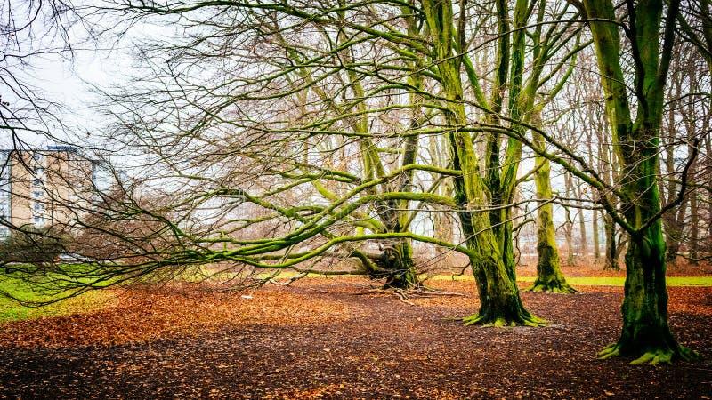 Härlig skogplats med massor av ovanlig träd och lövverk arkivfoto