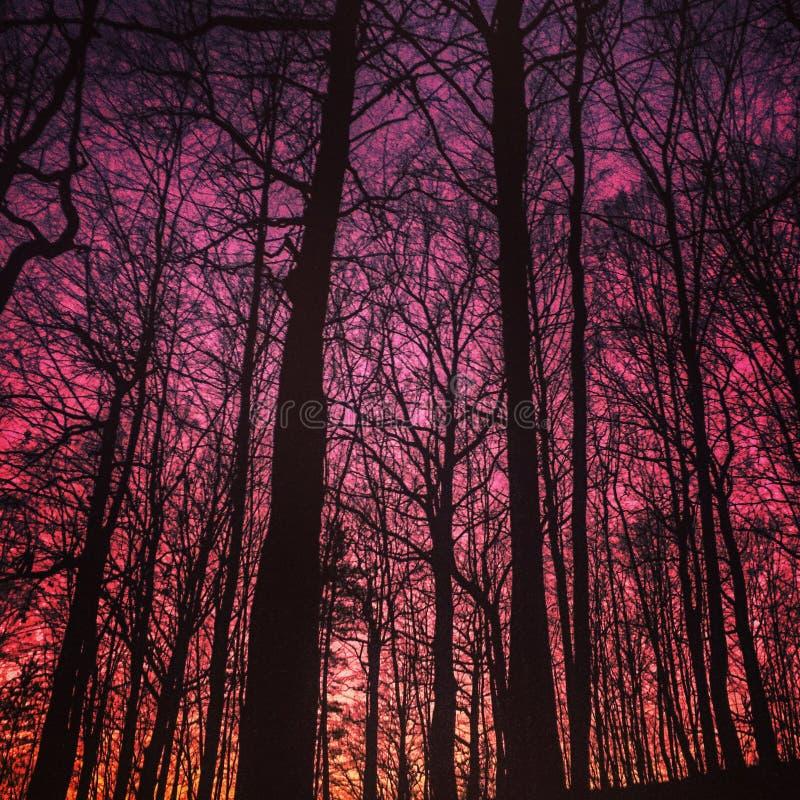 härlig skogsolnedgång arkivfoto