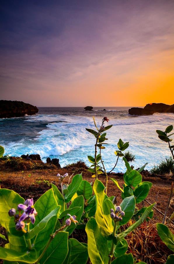 Härlig skymning på strandkorallen royaltyfria bilder