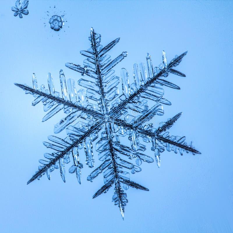 Härlig snöflinga på ett ljust - blått bakgrundsslut upp arkivbilder
