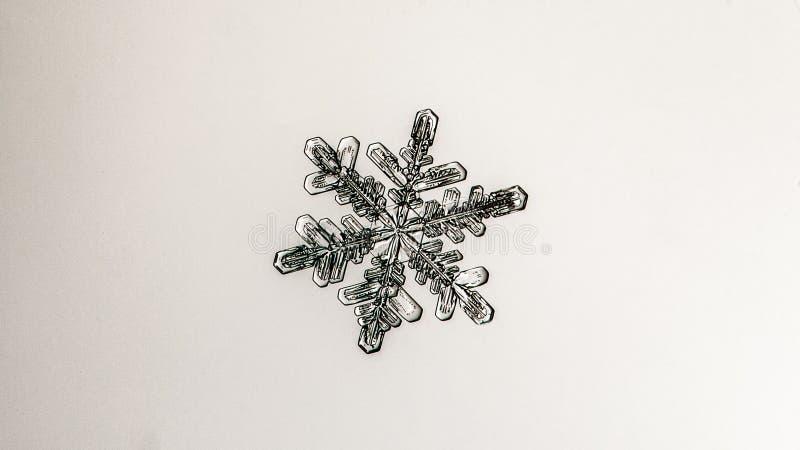 Härlig snöflinga på ett ljust vitt bakgrundsslut upp royaltyfria bilder