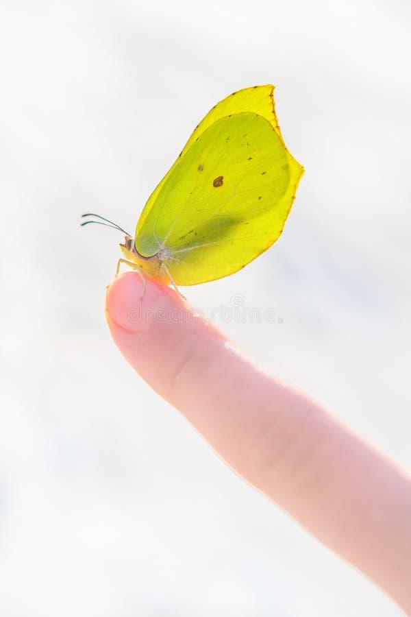 Härlig sol tänd gul fjäril på ett barns pekfinger mot suddig snöig bakgrund arkivfoto