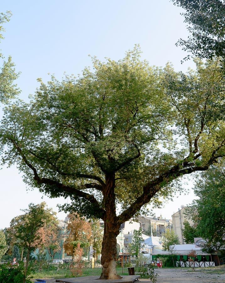 Härlig solig dag och stort träd i mitt i parkera royaltyfria bilder