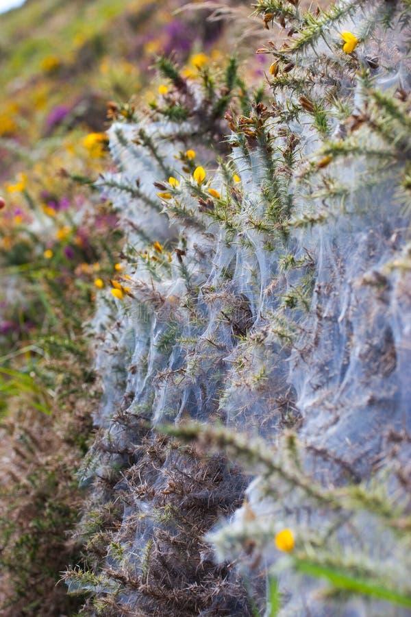 Härlig solig naturbakgrund med spindelrengöringsduk på blommor arkivfoto