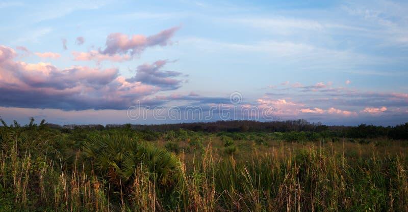 Härlig solnedgång över Florida Everglades arkivbild