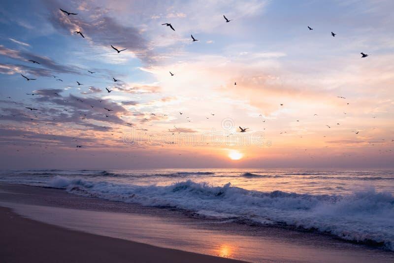 Härlig solnedgång över havet i rosa färg med flocken av fåglar fotografering för bildbyråer
