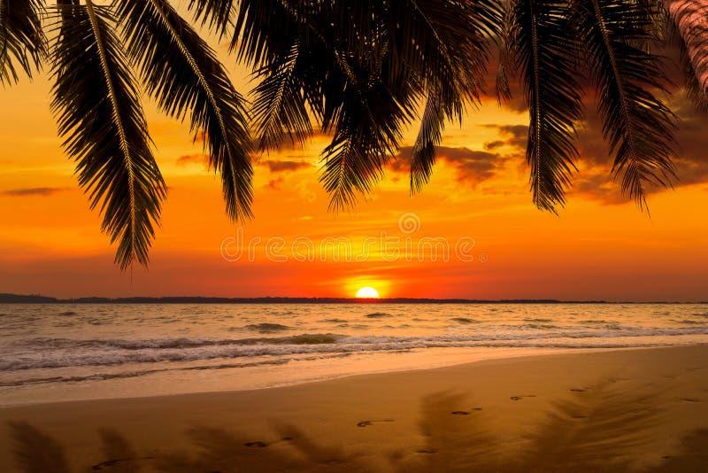 Härlig solnedgång över havet med kokospalmen på sommar arkivfoton