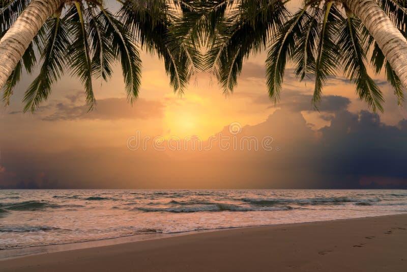 Härlig solnedgång över havet med kokospalmen på sommar arkivbilder
