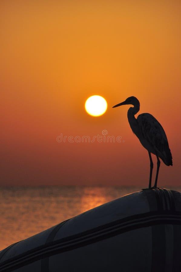 Härlig solnedgång över havet med reflexioner av röda och gula strålar på havsyttersidan som spelar på strandvågorna med en fågel  royaltyfri foto