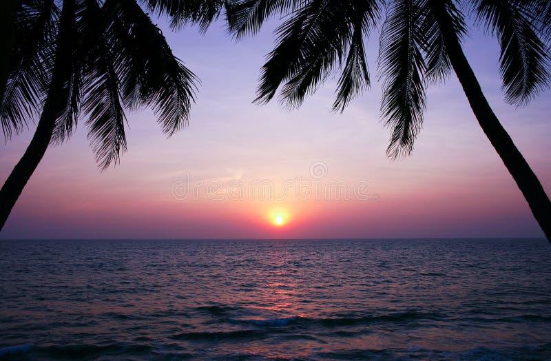Härlig solnedgång över havet och palmträdkonturerna royaltyfria foton